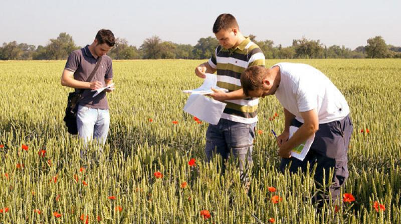 Top MSC Agriculture Colleges In Punjab