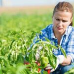 Top Agriculture Colleges in Nepal