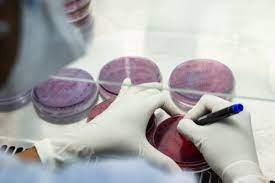 MSC Microbiology Colleges in Kerela