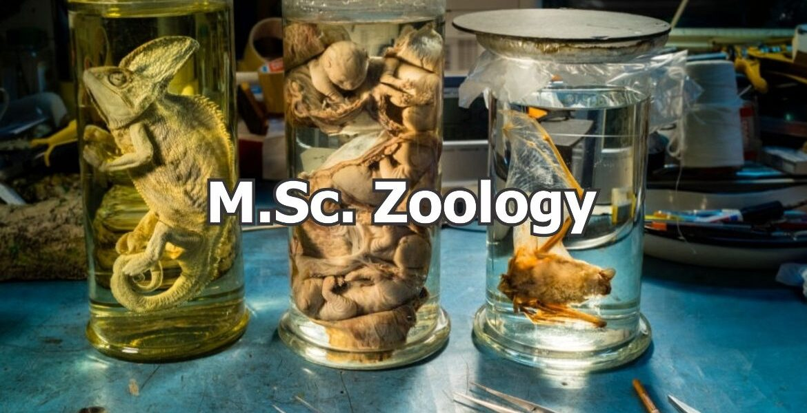 MSc Zoology Colleges in South India