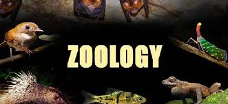 Top MSC Zoology Colleges in Punjab
